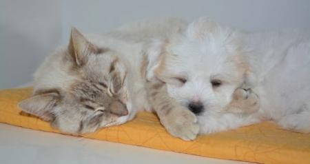 Wspomóż psiaka lub kociaka